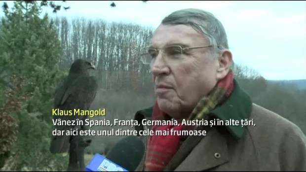 mangold